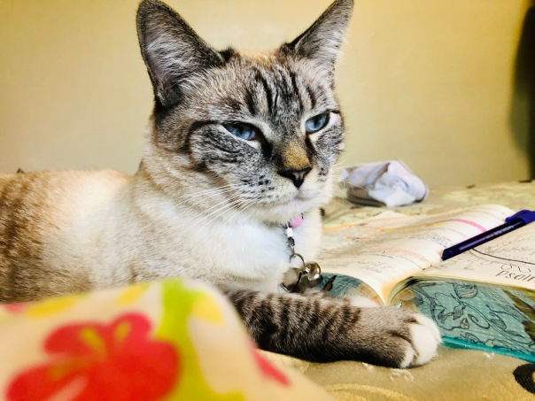 Cream colored siamese cat with lynx points laying and blue eyes on a bed